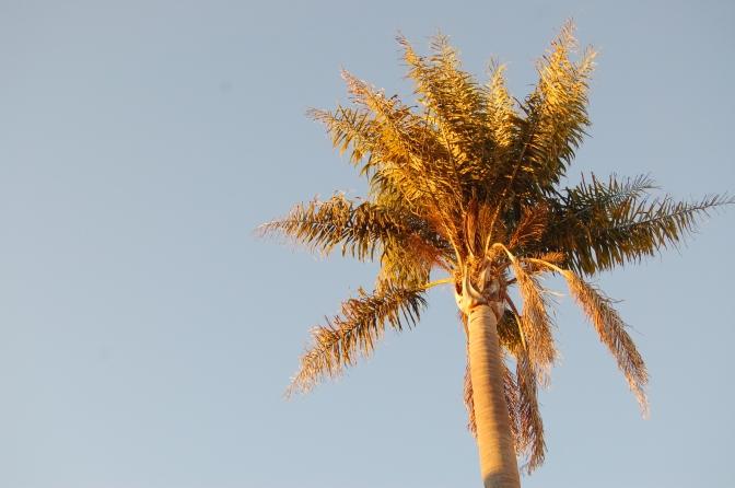 The Palm Tree's Stump
